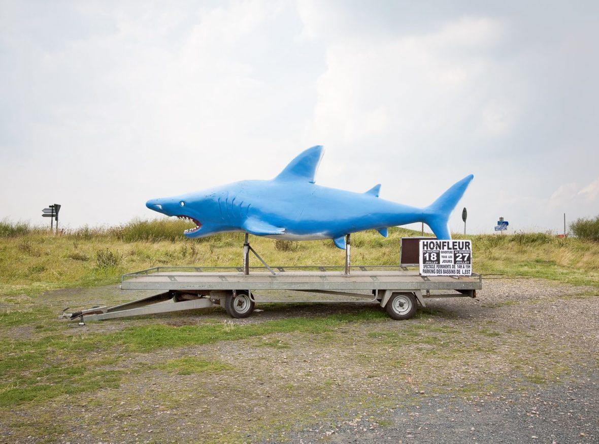 Le requin de Nelly et Eric pour l'ARN